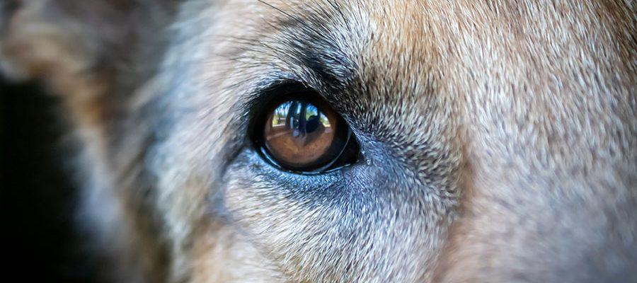 Επικοινωνία σε ανώτερο επίπεδο - Σωστή Εκπαίδευση Σκύλου