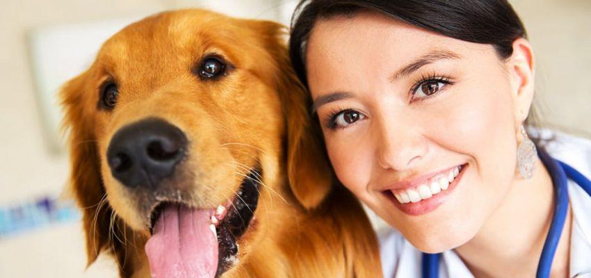 Πόσο συχνά κάνετε τσεκ-απ στον σκύλο σας; Μίλα στο Σκύλο σου - Υγεία