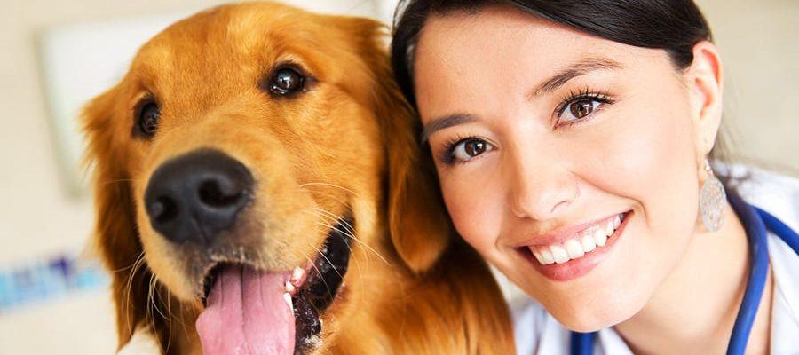 Τσεκ-απ στον σκύλο - Μίλα στο Σκύλο σου - Υγεία
