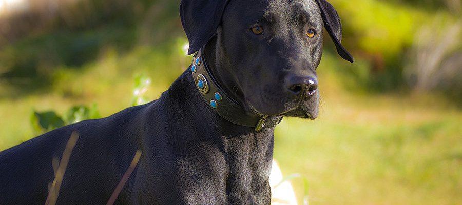 Σκύλοι και ανεπτυγμένη αίσθηση δικαιοσύνης - Ψυχολογία Σκύλων - Μίλα στο Σκύλο σου blog