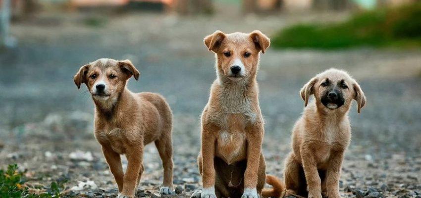 Αλλαγές στους νόμους για τα κατοικίδια - Μίλα στο Σκύλο σου - Επικαιρότητα
