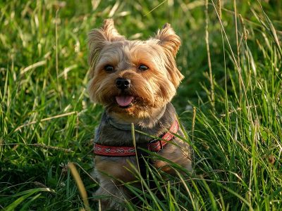 Dog Training Services | Positive Dog Training Corfu