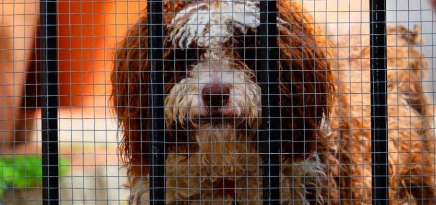 Ζώα μόνο από καταφύγια στην Καλιφόρνια - Μιλα στο Σκύλο σου - Επικαιρότητα