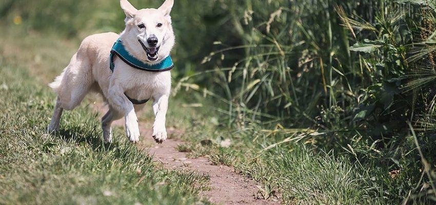 Μίλα στο Σκύλο σου - Υγεία