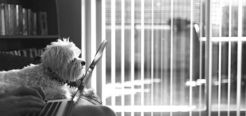 Σκύλοι και διαδίκτυο - Εκπαίδευση - Μίλα στο Σκύλο σου