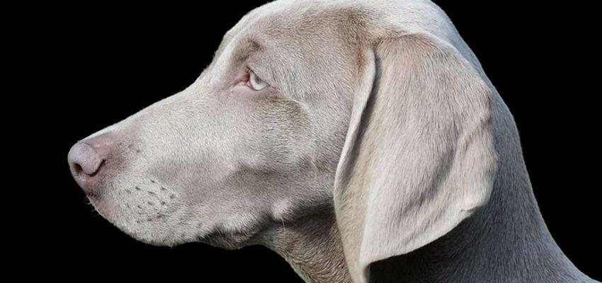 Σκύλοι και διαίσθηση - Μίλα στο Σκύλο σου