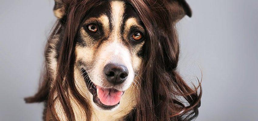 Γιατί μαδάνε οι σκύλοι; Μίλα στο Σκύλο σου - Υγεία - Μίλα στο Σκύλο σου