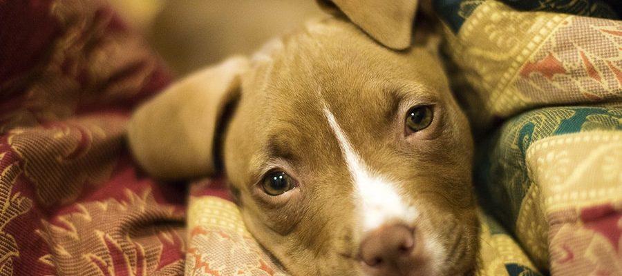 Βασική Υπακοή - Θετική Εκπαίδευση Σκύλων