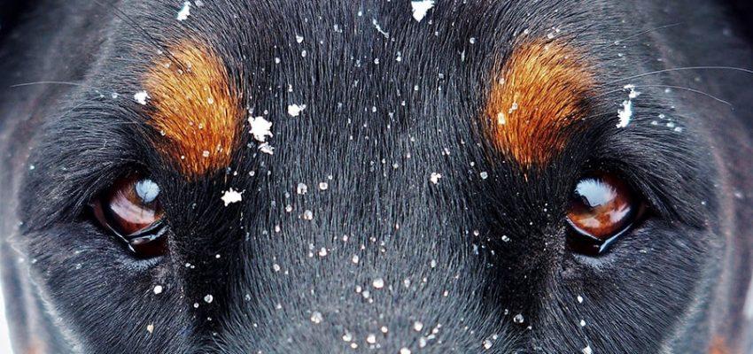 Σκύλος και προκατάληψη - Μίλα στο Σκύλο σου - Ιστορίες