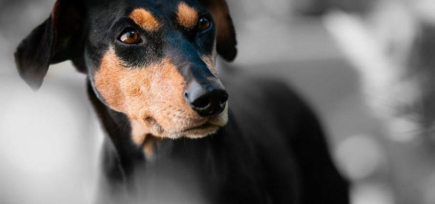5 κανόνες της σωστής εκπαίδευσης σκύλων - Μίλα στο Σκύλο σου