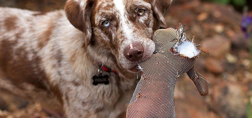 Τα σωστά κίνητρα στην εκπαίδευση σκύλου - Μίλα στο Σκύλο σου
