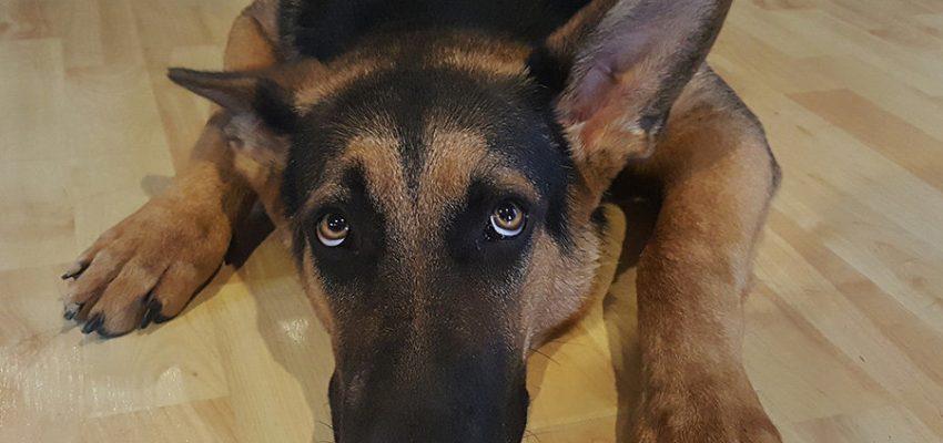 Σκύλος και βία - Θετική Εκπαίδευση Σκύλων