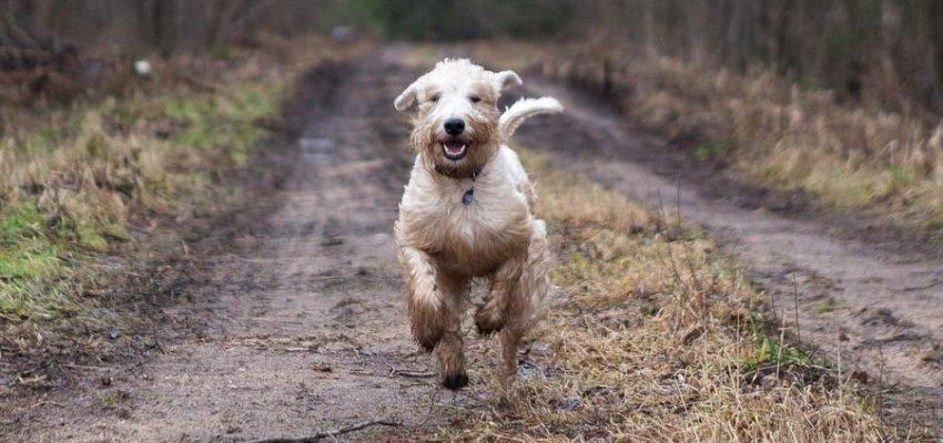 Κάλεσμα σκύλου - Θετική Εκπαίδευση Σκύλων
