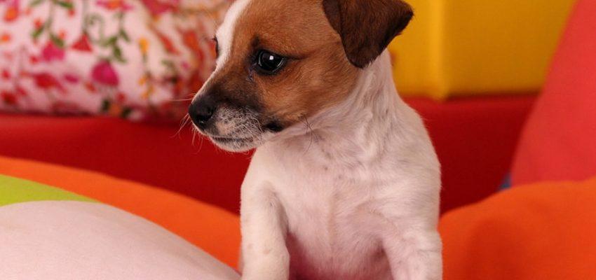 Σκύλος και τουαλέτα - Εκπαίδευση - Μίλα στο Σκύλο σου