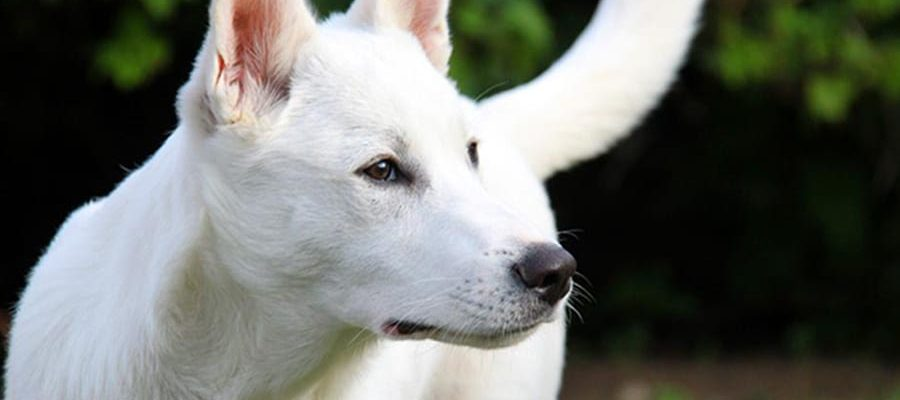 8ff1f5f11bff Ψηφίστηκε ο νέος νόμος για αδέσποτα και κατοικίδια - Μίλα στο Σκύλο σου