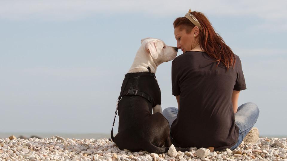 Online Εκπαίδευση Σκύλου και Ιδιοκτήτη - Μίλα στο Σκύλο σου