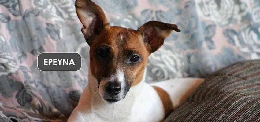 Τα πλεονεκτήματα του σκύλου μέσα στο σπίτι - Μίλα στο Σκύλο σου - Υγεία