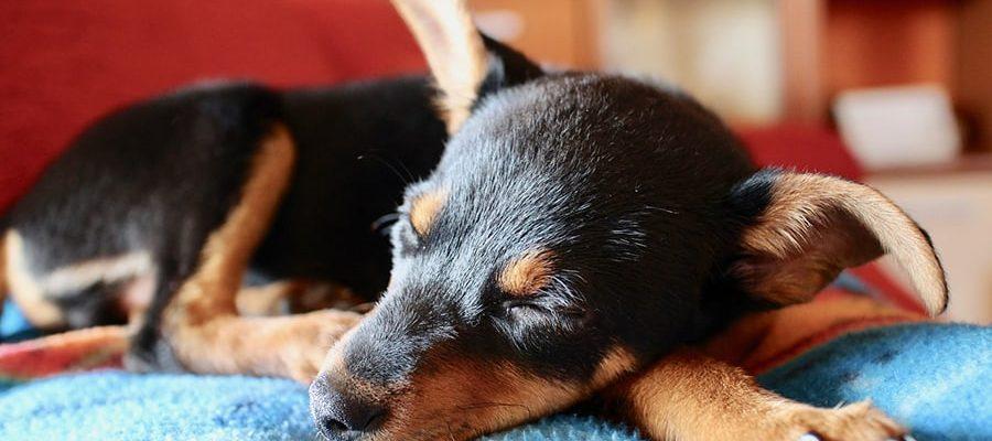 Τι ονειρεύονται οι σκύλοι - Μίλα στο Σκύλο σου - Υγεία