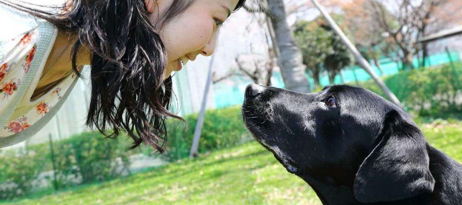 Σκύλοι και νοοτροπία - Θετική Εκπαίδευση Σκύλων