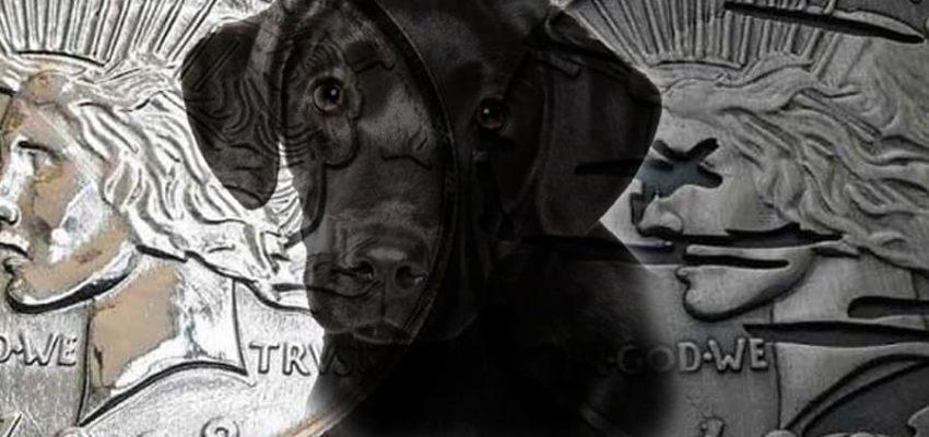 Πώς να εκπαιδεύσω τον σκύλο μου; Παραδοσιακά ή θετικά; Μίλα στο Σκύλο σου