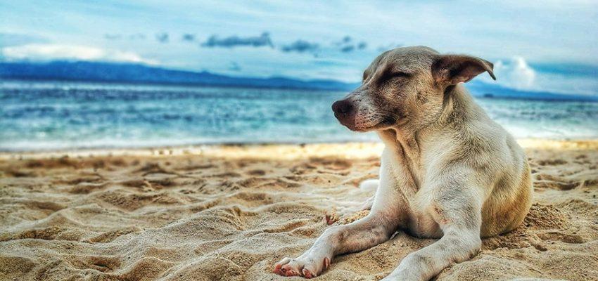 Το βιβλίο της πόλης - Ψυχολογία σκύλων - Μίλα στο Σκύλο σου blog