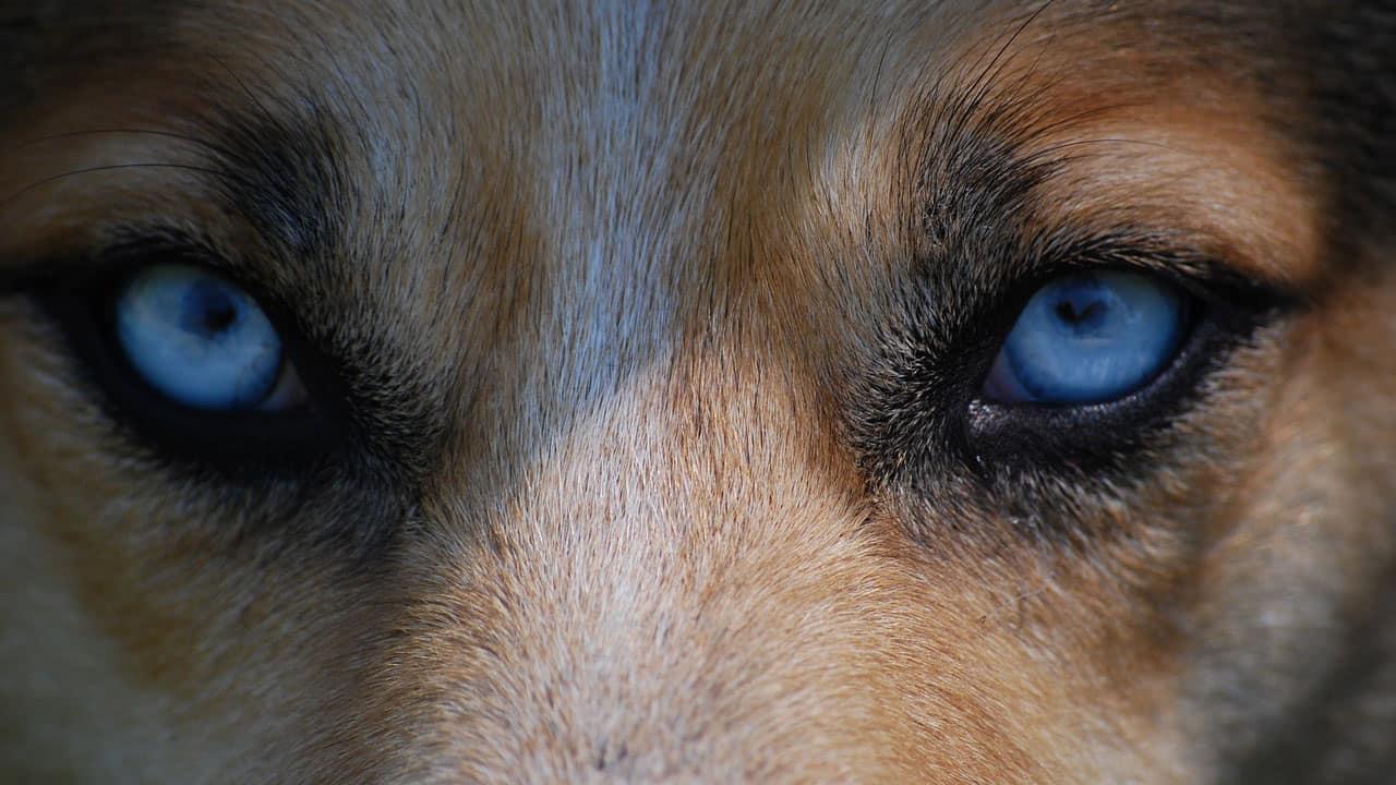 Κοίταξέ με στα μάτια - Θετική Εκπαίδευση Σκύλων
