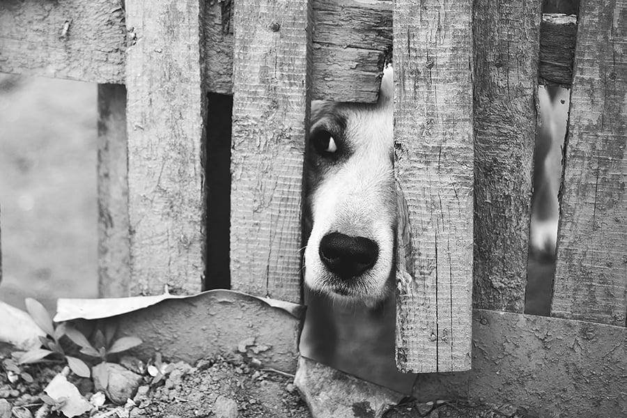 Φοβικός Σκύλος - Μίλα στο Σκύλο σου