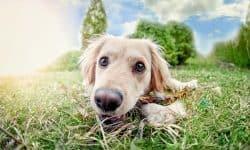Γιατί να εκπαιδεύσω τον σκύλο μου;