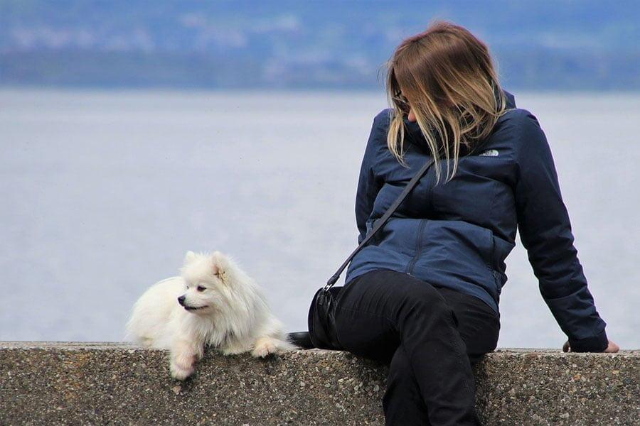 Νέο σχέδιο Νόμου για την ευζωία των ζώων συντροφιάς