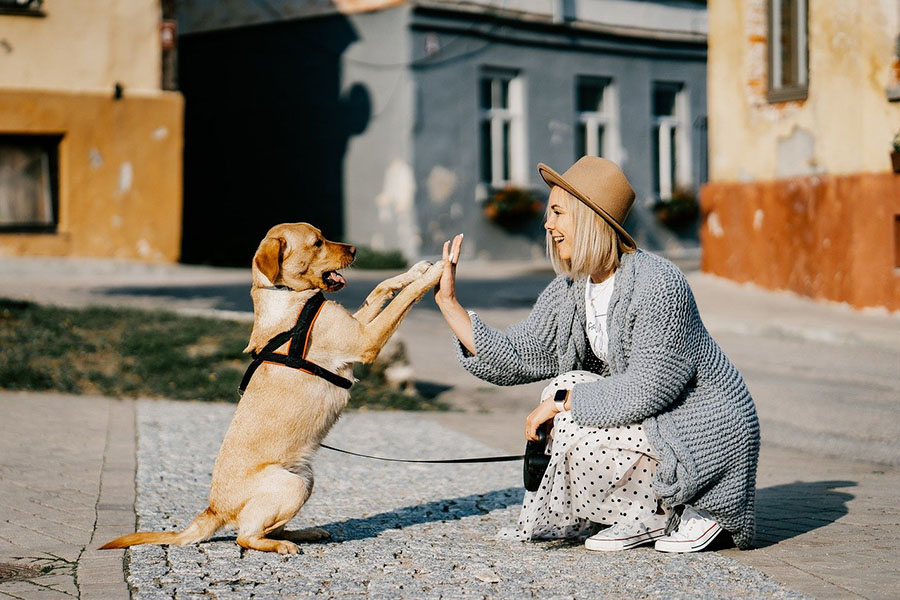 Σωστή Επιλογή Σκύλου - Μίλα στο Σκύλο σου - Ράτσες