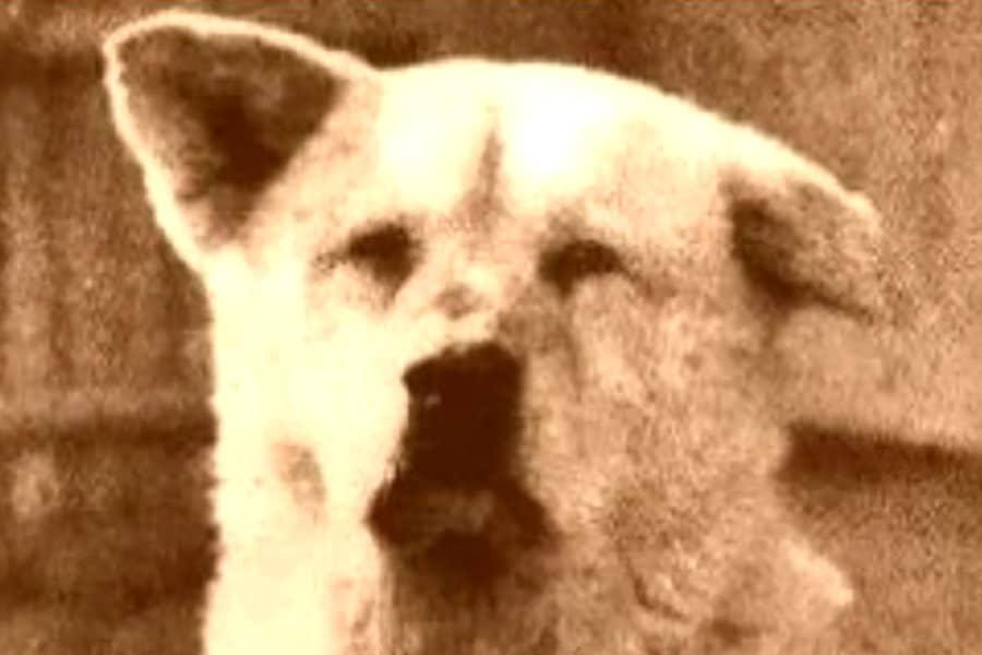 Η ιστορία του Χάτσικο - Μίλα στο Σκύλο σου