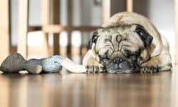 Τα λάθη που πληγώνουν τον σκύλο σου!