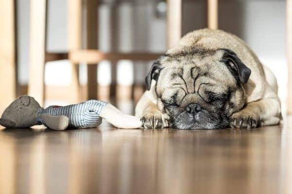 Τα λάθη που πληγώνουν τον σκύλο σου - Ψυχολογία σκύλων - Μίλα στο Σκύλο σου