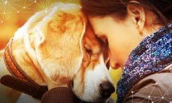 Πείτε στον σκύλο σας «σ' αγαπώ» στη γλώσσα του