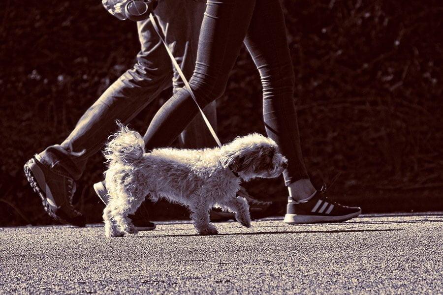 Υπακοή σε εντολές και υποδείξεις - Εκπαίδευση σκύλων - Μίλα στο Σκύλο σου