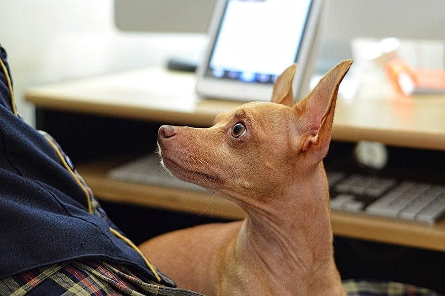 Ο σκύλος δεν ακούει - Εκπαίδευση - Μίλα στο Σκύλο σου
