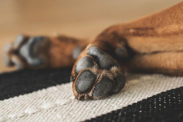 The philosophy of dog training - Positive Dog Training Corfu