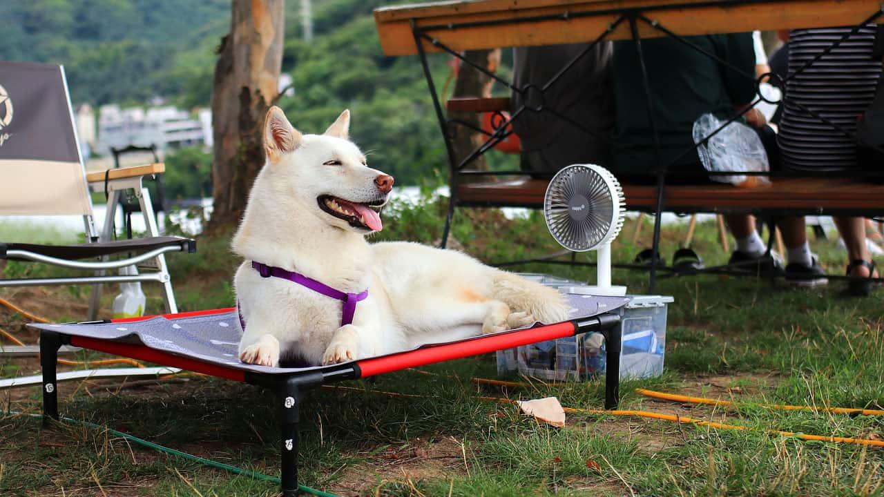 Σκύλοι και θερμοπληξία - Υγεία - Μίλα στο Σκύλο σου