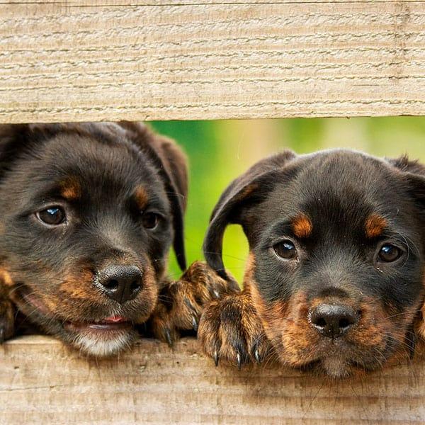 Θετική Εκπαίδευση Σκύλων Συχνές Ερωτήσεις
