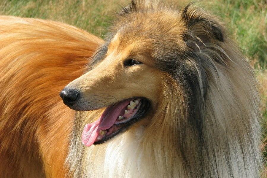 Μίλα στο Σκύλο σου - Ιστορίες