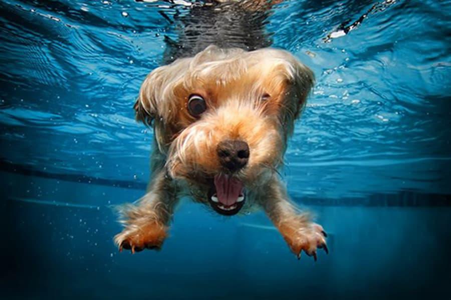 Να κάνω μπάνιο τον σκύλο αφού κολυμπήσει; - Μίλα στο Σκύλο σου - Υγεία