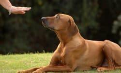 Να στείλω τον σκύλο μου για εκπαίδευση;